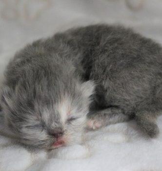 Photos des bébés de Nuit Etoilée