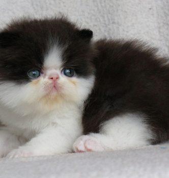 De nouvelles photos des chatons !